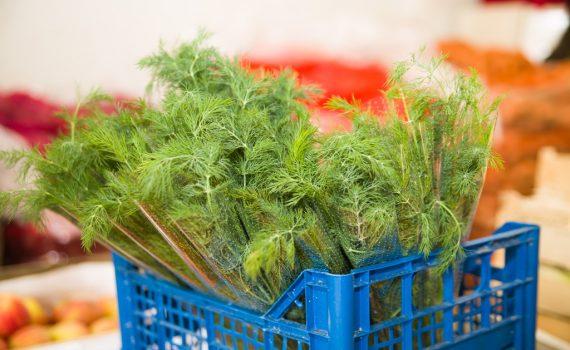 Koperek - warzywa Koszalin, hurtownia Tar-Pol